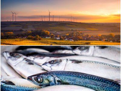 Agricultura, produção animal, caça, floresta e pesca (Setor)